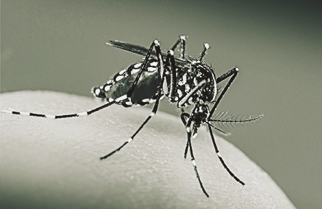 zika-virus-quiz-promo