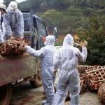 Bird flu outbreak naitala sa 5 probinsya sa Vietnam