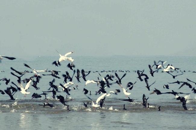 migratory