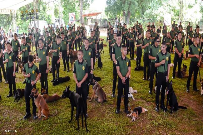 K9-DOGS-PDEA