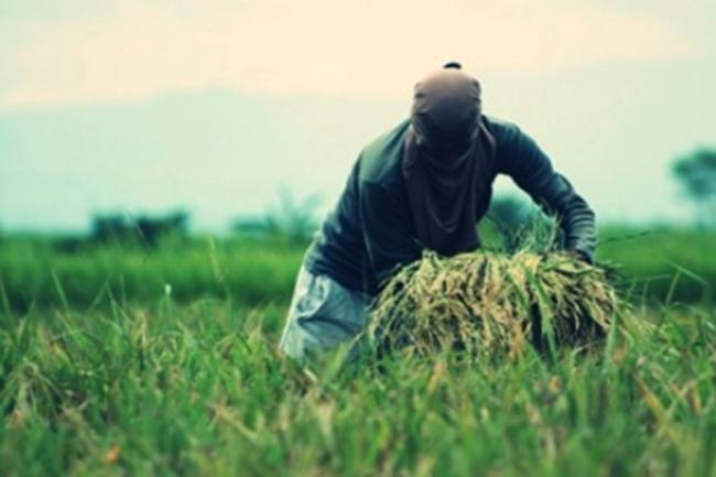 MAGSASAKA-FARMER