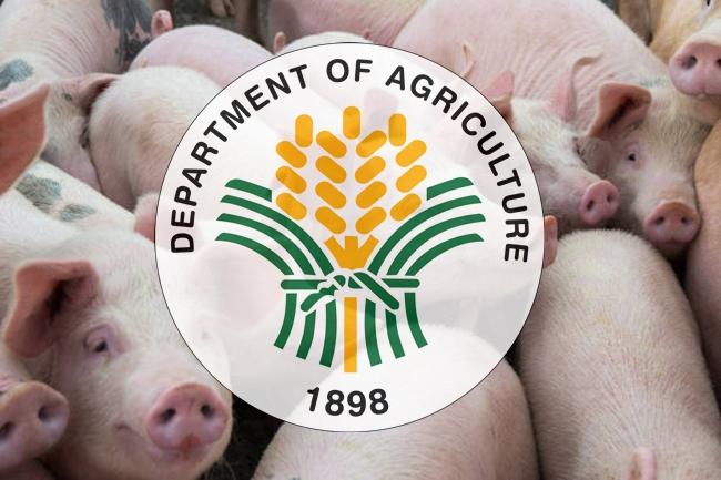 DA-BABOY-AGRICULTURE-ASF