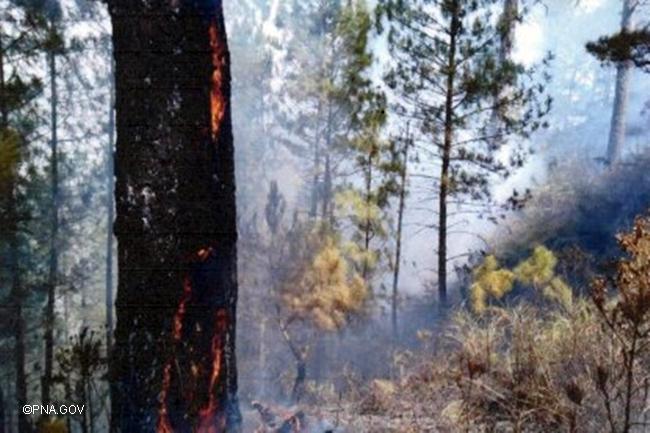 BENGUET FORREST FIRE