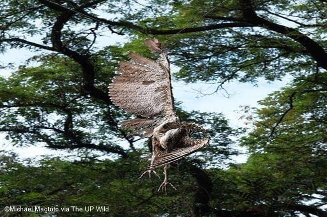 night heron up