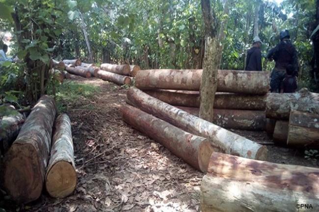 illegal loggings